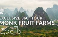 5K 360° VR Tour // Lakanto Monk Fruit Farms in Guilin China (2020)