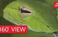 Costa Rican jungle in 360° – Planet Earth II: Jungles – BBC One