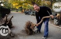 Stroll in the Park With Ai Weiwei | 360 VR Video | The New York Times