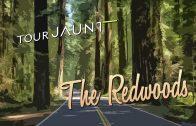 Tour Jaunt: The Redwoods 360 video