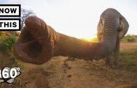 Visit a Baby Elephant Orphanage in Kenya   Unframed by Gear 360   NowThis