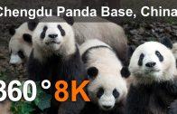 360°, Chengdu Panda Base, China, 8K aerial video