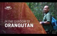 360 Video – In the Shadow of Orangutan