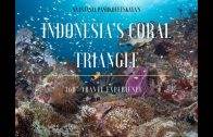 Dive into Indonesia Coral Triangle – 3D 360° Travel Experience