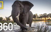 Elephant Encounter in 360 – Ep. 2 | The Okavango Experience