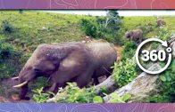 Elephants in 360 4K – Bird's Eye View (Wildlife and Nature 2018)