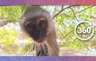 Monkey Business | Wildlife in 360 VR