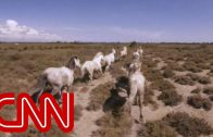Running with France's wild horses – 360 Video